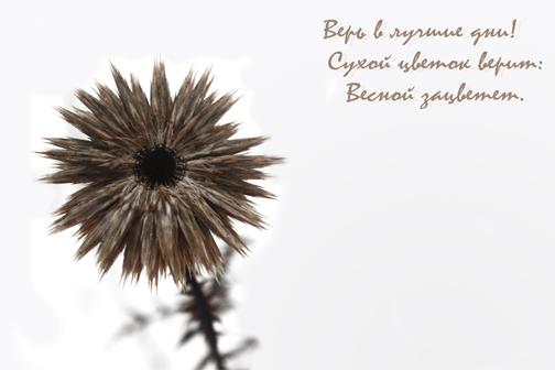 Полевой цветок, весна, цветение