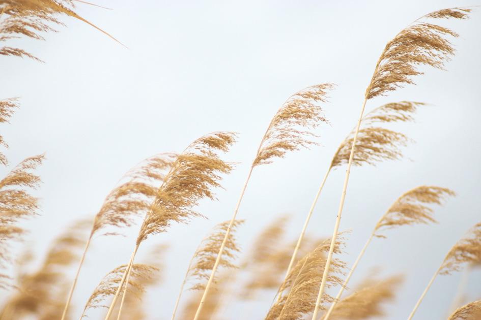 Камыши, берег, ветер